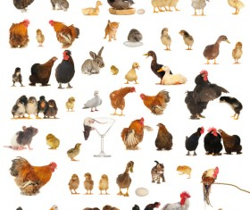 All kinds of farm animals Stock Photo 05