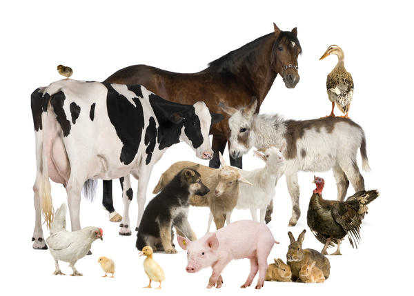 All kinds of farm animals Stock Photo 06