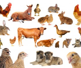 All kinds of farm animals Stock Photo 07