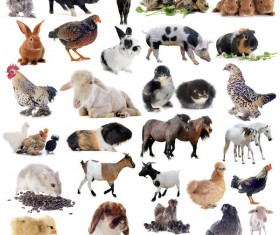 All kinds of farm animals Stock Photo 08