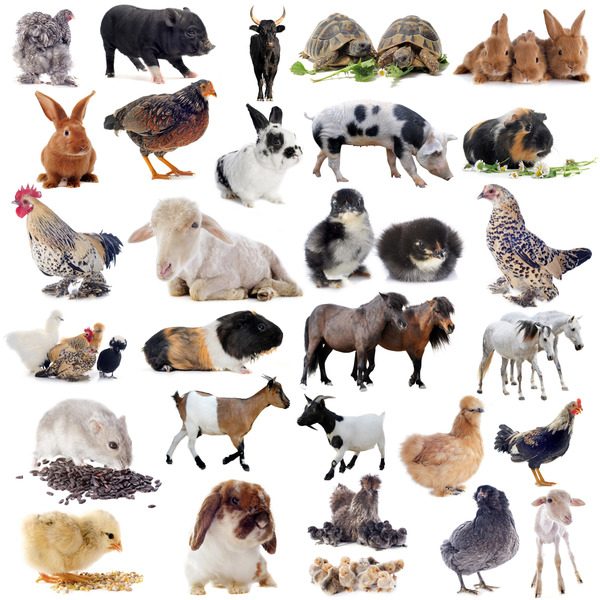 All kinds of farm animals Stock Photo 08 free download