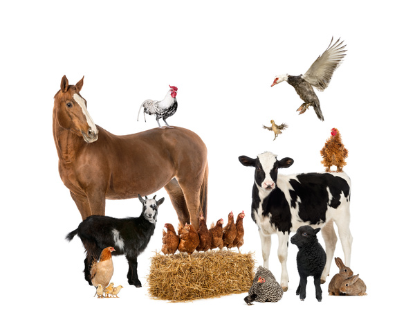All kinds of farm animals Stock Photo 09