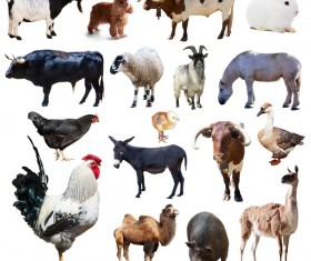 All kinds of farm animals Stock Photo 10