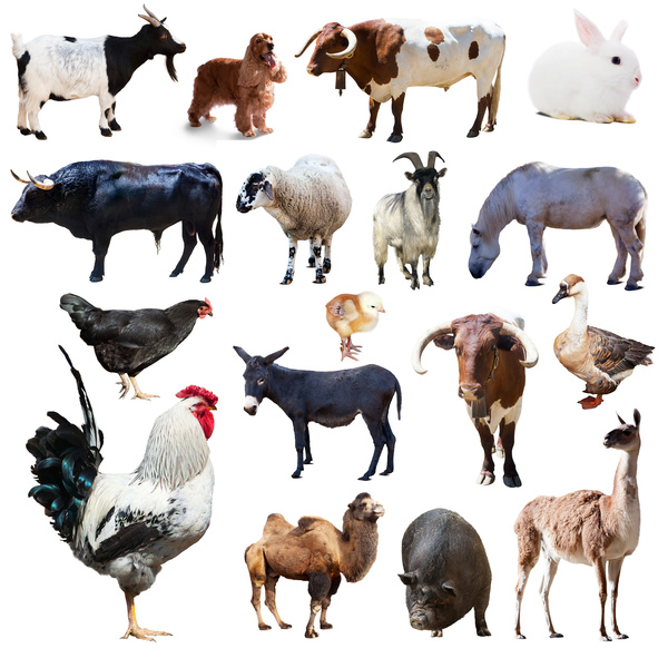 All kinds of farm animals Stock Photo 10 - Animal stock ...