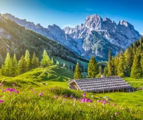 Alps mountain meadow landscape Stock Photo 09