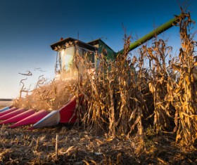 Autumn agricultural harvest Stock Photo 01