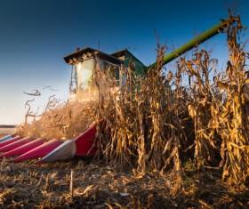 Autumn agricultural harvest Stock Photo 01