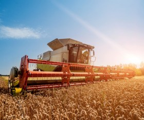 Autumn agricultural harvest Stock Photo 05