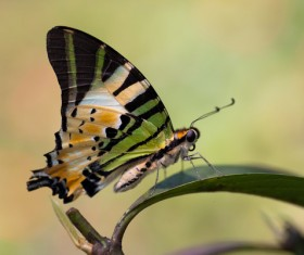 Beautiful butterfly on a leaf Stock Photo
