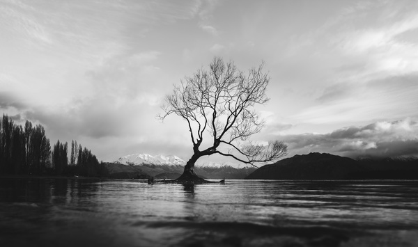 Black white picture of tree on calm lake Stock Photo