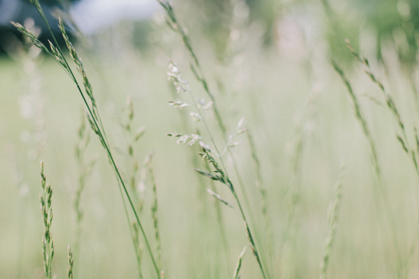 Closeup of fragile wild grass in nature Stock Photo