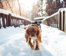 Cute puppy walking on snow Stock Photo