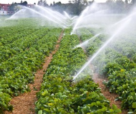 Field Irrigation System watering Stock Photo 11