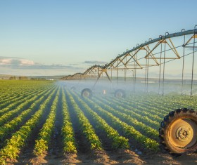 Field Irrigation System watering Stock Photo 16