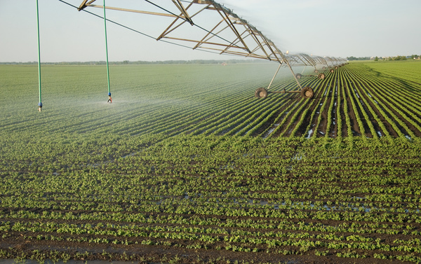 Field Irrigation System watering Stock Photo 22