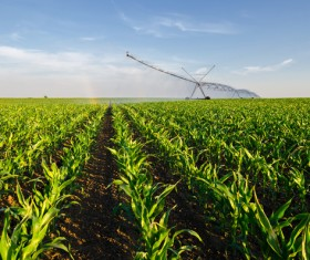 Field Irrigation System watering Stock Photo 24