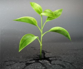 Green seedlings with land vector