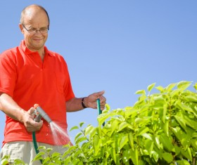 Man watering plant gardening Stock Photo 02