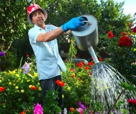 Man watering plant gardening Stock Photo 04