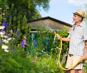Man watering plant gardening Stock Photo 05