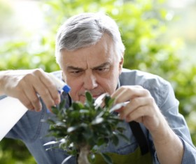 Man watering plant gardening Stock Photo 06