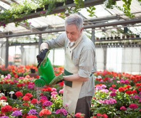Man watering plant gardening Stock Photo 07