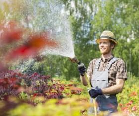 Man watering plant gardening Stock Photo 08