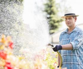 Man watering plant gardening Stock Photo 09