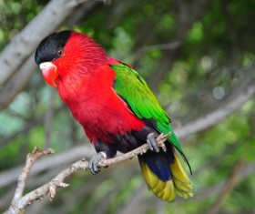Pretty red parrot Stock Photo