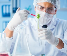 Scientists cultivate plants in the laboratory Stock Photo 01