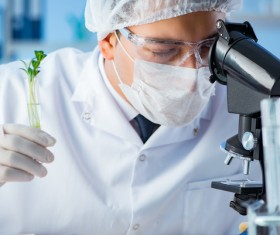 Scientists cultivate plants in the laboratory Stock Photo 02