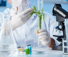 Scientists cultivate plants in the laboratory Stock Photo 03