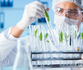 Scientists cultivate plants in the laboratory Stock Photo 04