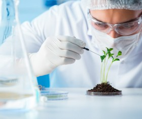 Scientists cultivate plants in the laboratory Stock Photo 06