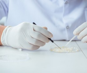 Scientists develop cells in the laboratory Stock Photo 02