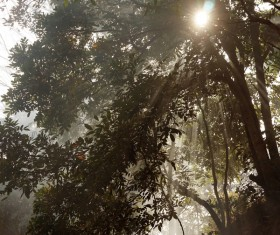 Sun ray in misty forest Stock Photo