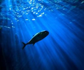 Sun rays and fish in blue dark sea Stock Photo