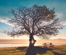 Sun through the tree Stock Photo