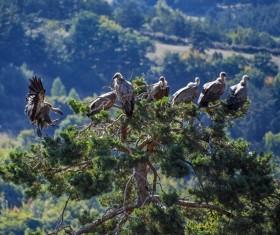 Tree habitat vultures Stock Photo
