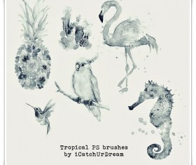 Tropical Photoshop Brushes