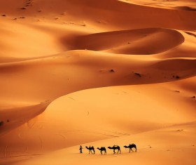 Walking in the desert camel team Stock Photo 01