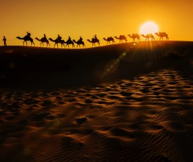 Walking in the desert camel team Stock Photo 02