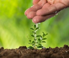 Watering plant seedlings Stock Photo 01