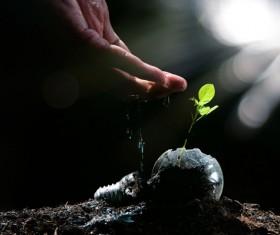 Watering plant seedlings Stock Photo 02
