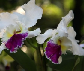White Butterfly Bonsai Stock Photo