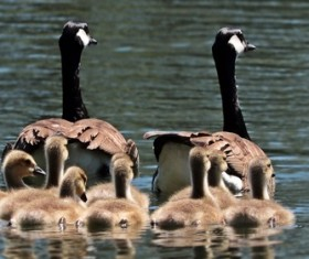 Wildlife photography Stock Photo