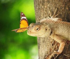 butterfly on the head of a lizard Stock Photo