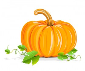 pumpkin with green leaves vector material
