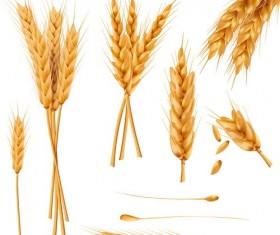 wheat illustration vector material 02