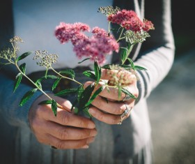 wild flowers on woman hands Stock Photo